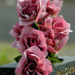 Pink flowers on a grave stone