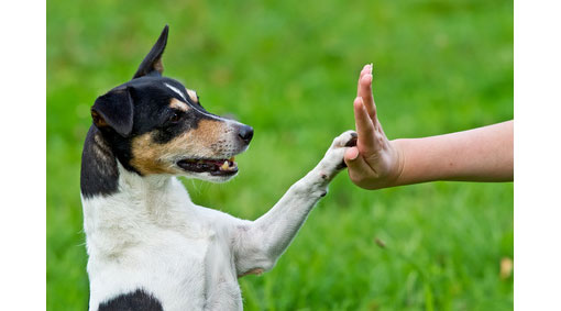 human touching hand with a dogs paw
