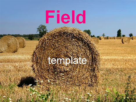 Field and hay bales
