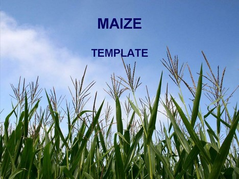 Maize powerpoint template toneelgroepblik Images