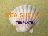 Sea Shells PowerPoint Template