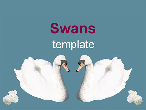Swans Template