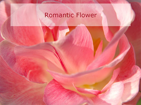 Romantic flowers - Presentation Magazine