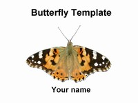 Butterfly Template thumbnail