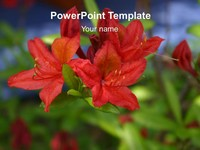 Red Flower PowerPoint Template