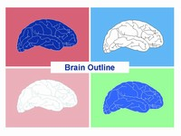 Brain outline