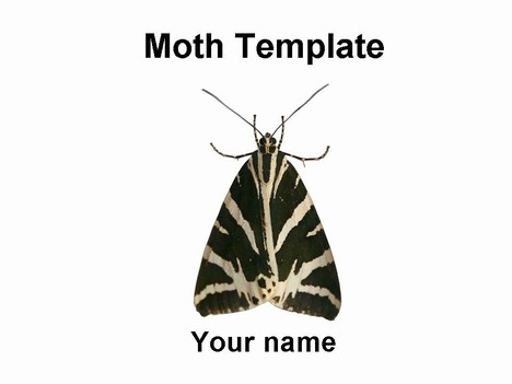Moth PowerPoint template