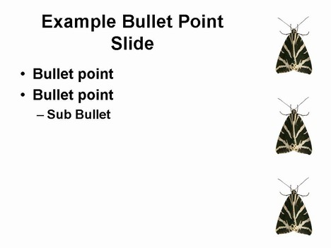 Moth PowerPoint template inside page