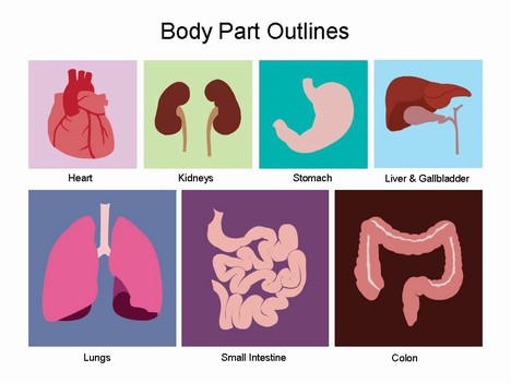 ... for clip art containing the different internal organs within the body