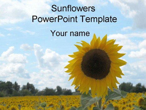 Free Sunflower PowerPoint Template