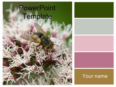 Bee on Flowers Template