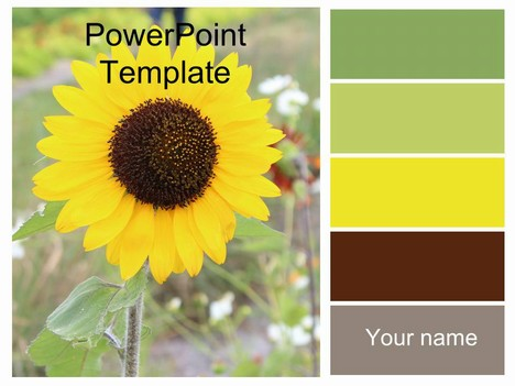 Pretty Sunflower Template