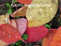 Autumn Template thumbnail