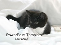 Kitten PowerPoint Template thumbnail