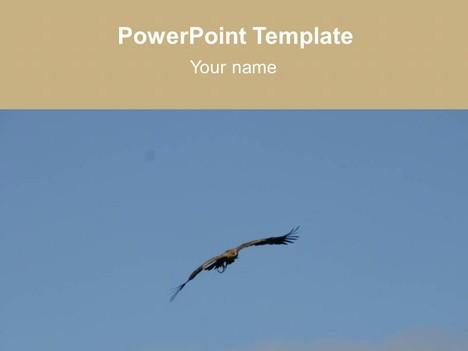 flying bird template