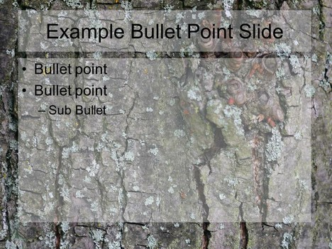 Tree Bark PowerPoint Template inside page