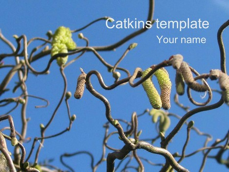 Catkins Template