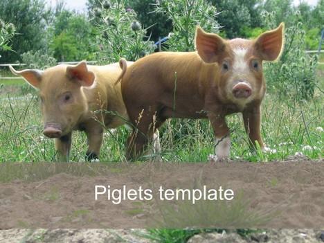 Piglet Powerpoint Template