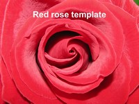 Red Rose Template
