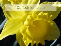 Daffodil PowerPoint Template