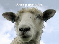 Woolly Sheep PowerPoint Template thumbnail