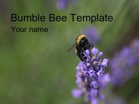 Bumblebee PowerPoint Template thumbnail