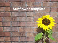 Sunflower PowerPoint Template 2