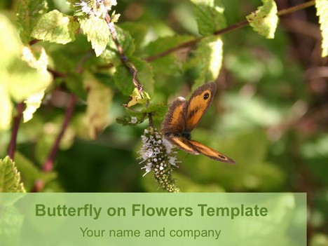 Butterfly on Flowers Template