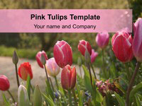 Free Pink Tulips PowerPoint Template thumbnail