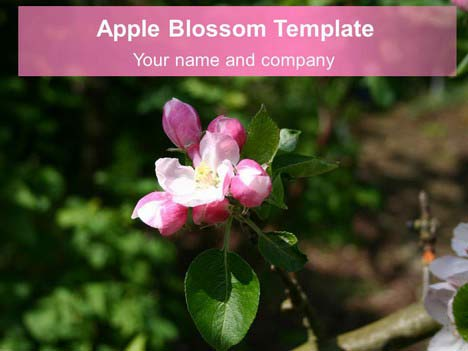 Apple Blossom Background Template