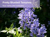 Free Pretty Bluebell PowerPoint Template