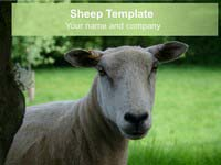 Free Sheep PowerPoint Template thumbnail