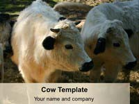 Cow PowerPoint Template thumbnail