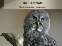 Free Owl PowerPoint Template thumbnail