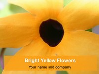 Bright Yellow Flowers Background Template