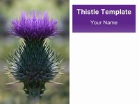 Scottish Thistle Template
