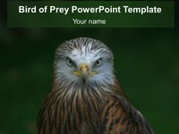 Bird of Prey PowerPoint Template thumbnail