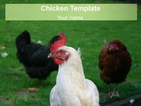 Free Chicken PowerPoint Template thumbnail
