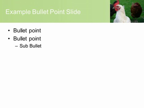 Free Chicken PowerPoint Template inside page