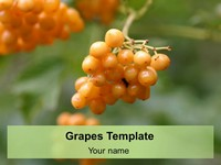 Grapes PowerPoint Template thumbnail