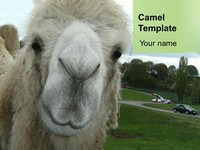 Camel PowerPoint Template thumbnail