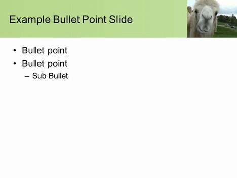 Camel PowerPoint Template inside page