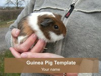 Guinea Pig PowerPoint Template thumbnail