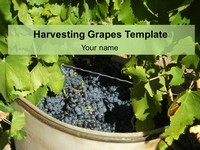 Harvesting Grapes Template