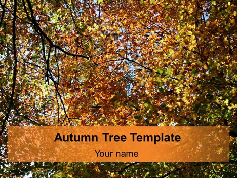 autumn tree template, Modern powerpoint