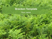 Bracken PowerPoint Template