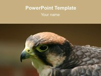 Bird PowerPoint Template thumbnail