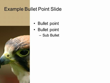 Bird PowerPoint Template inside page