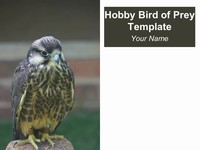 Hobby Bird of Prey Template