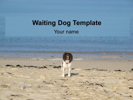 Waiting Dog PowerPoint Template